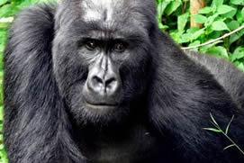 Gorilla Trek Rwanda with AA Tours Rwanda