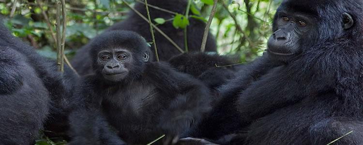 20 Days Rwanda Uganda Safari