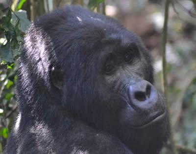 5 Days rwanda primate safari