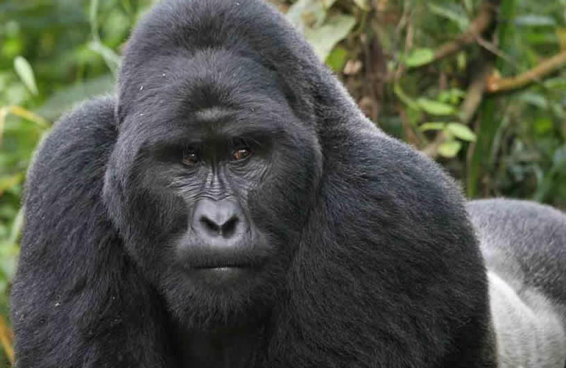 8 Days Uganda Primates &Wildlife Tour