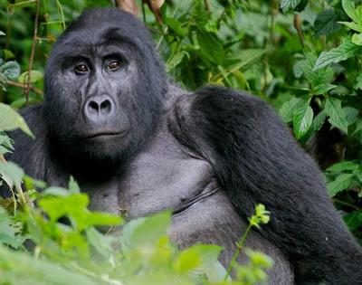 9 Days Rwanda Cultural & Gorilla Safari