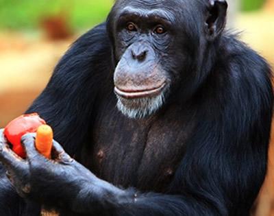 20 Days Rwanda Uganda Safari Experience