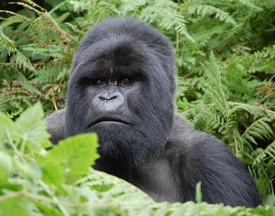 8 Days Rwanda & Uganda Trip and Safari