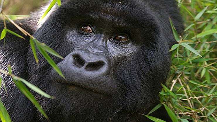 9 Days Rwanda Primates & Cultural Tour