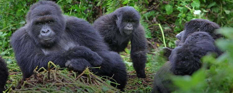 9 Days Ugandan national parks tour