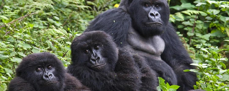 7 Days Uganda gorilla & Wildlife Tour