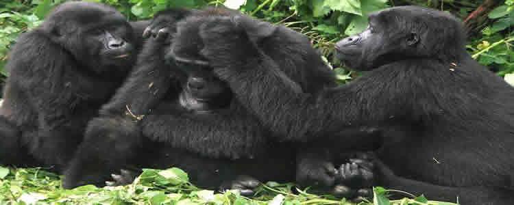 10 Days Uganda Rwanda Gorilla Safari