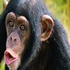 6 Days Rwanda Primate Safari Tour